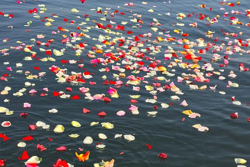 海に浮かぶ花