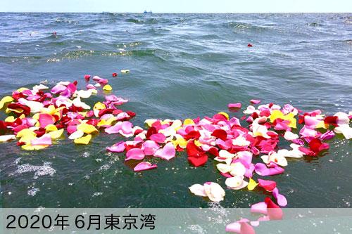 2020年6月に東京湾で散骨
